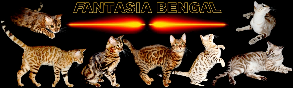 chatterie FANTASIA BENGAL
