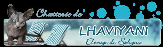 lhaviy10-1.png